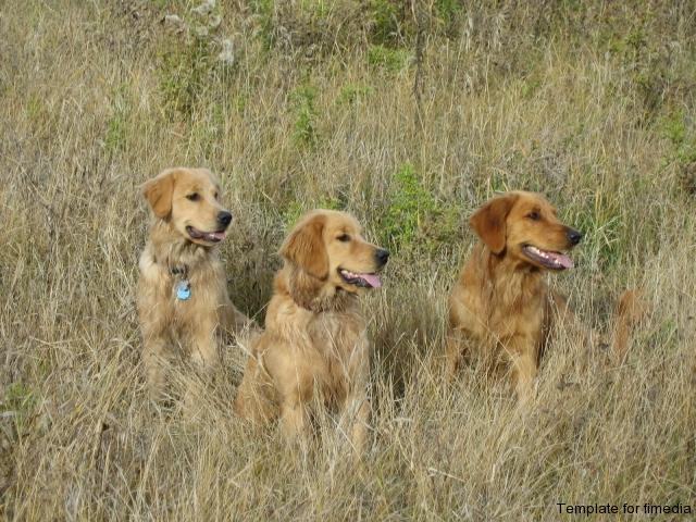 golden-girls-molly_-riley_-abbey